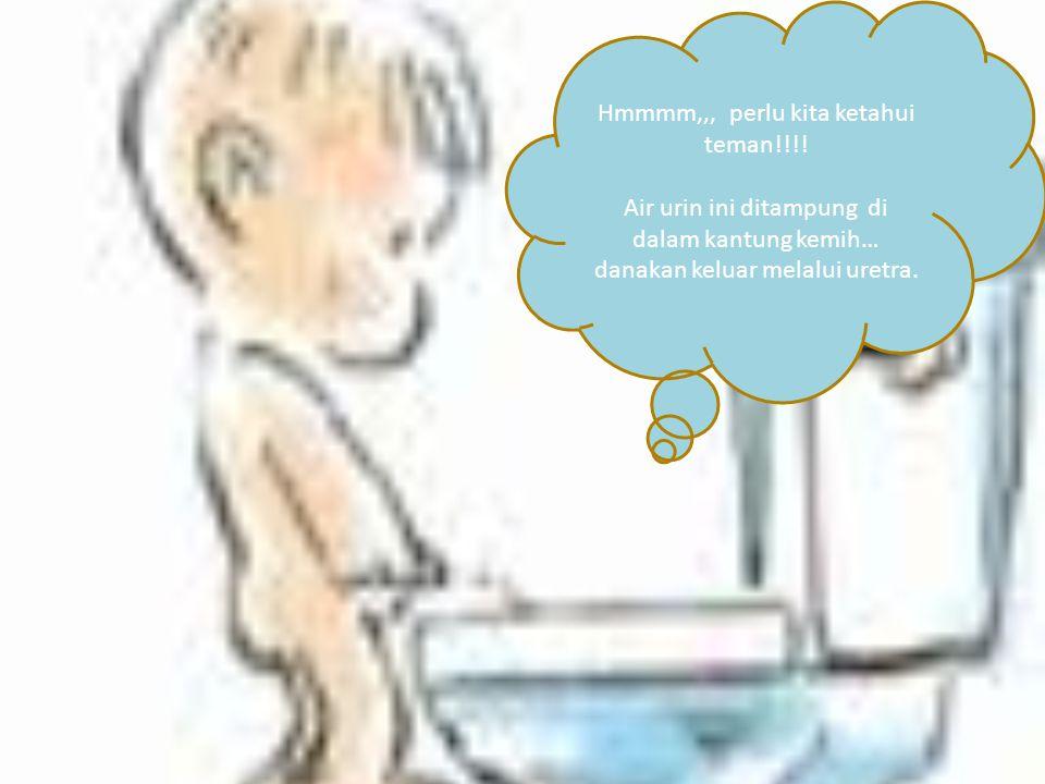 Hmmmm,,, perlu kita ketahui teman!!!! Air urin ini ditampung di dalam kantung kemih… danakan keluar melalui uretra.