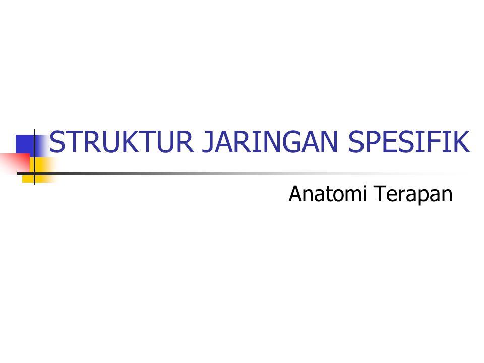 STRUKTUR JARINGAN SPESIFIK Anatomi Terapan