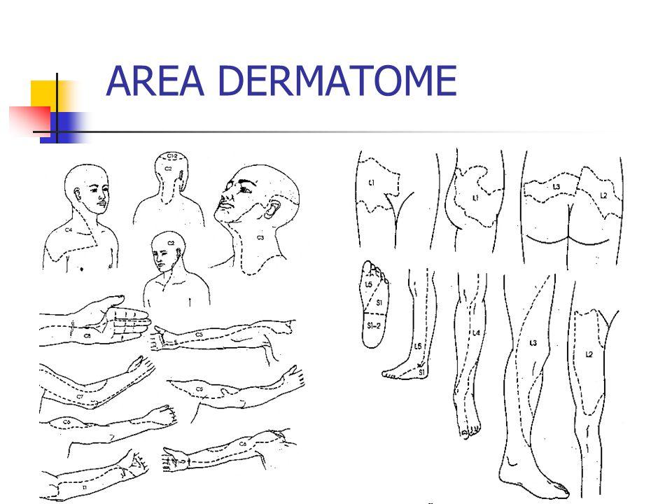 AREA DERMATOME