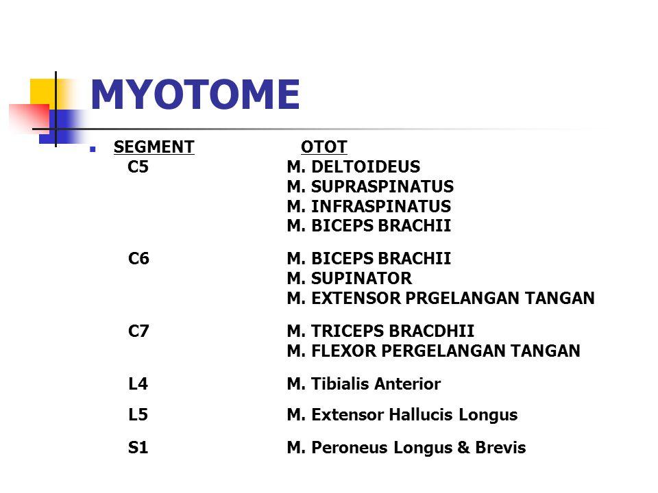 MYOTOME SEGMENT OTOT C5M. DELTOIDEUS M. SUPRASPINATUS M. INFRASPINATUS M. BICEPS BRACHII C6M. BICEPS BRACHII M. SUPINATOR M. EXTENSOR PRGELANGAN TANGA