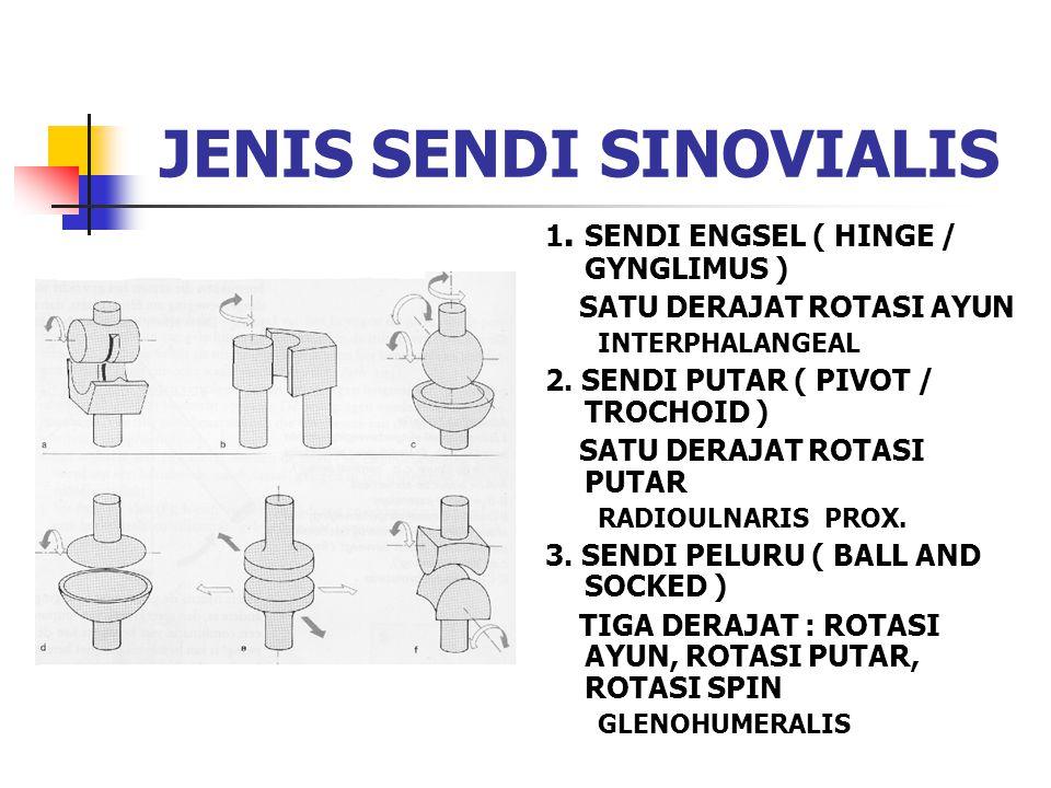 JENIS SENDI SINOVIALIS 1. SENDI ENGSEL ( HINGE / GYNGLIMUS ) SATU DERAJAT ROTASI AYUN INTERPHALANGEAL 2. SENDI PUTAR ( PIVOT / TROCHOID ) SATU DERAJAT