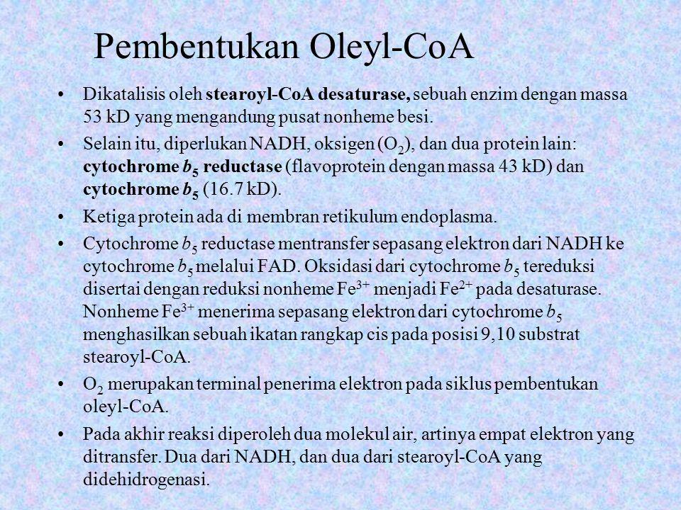 Pembentukan Oleyl-CoA Dikatalisis oleh stearoyl-CoA desaturase, sebuah enzim dengan massa 53 kD yang mengandung pusat nonheme besi. Selain itu, diperl