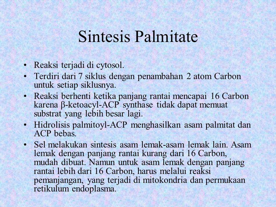 Transport Palmitate ke Mitokondria 1. Aktivasi Palmitate  Palmitoyl-CoA