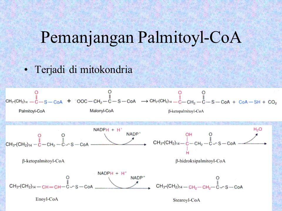 Pembentukan Oleyl-CoA Stearoyl-CoA + NADH + H + + O 2 → oleyl-CoA + NAD + + 2H 2 O