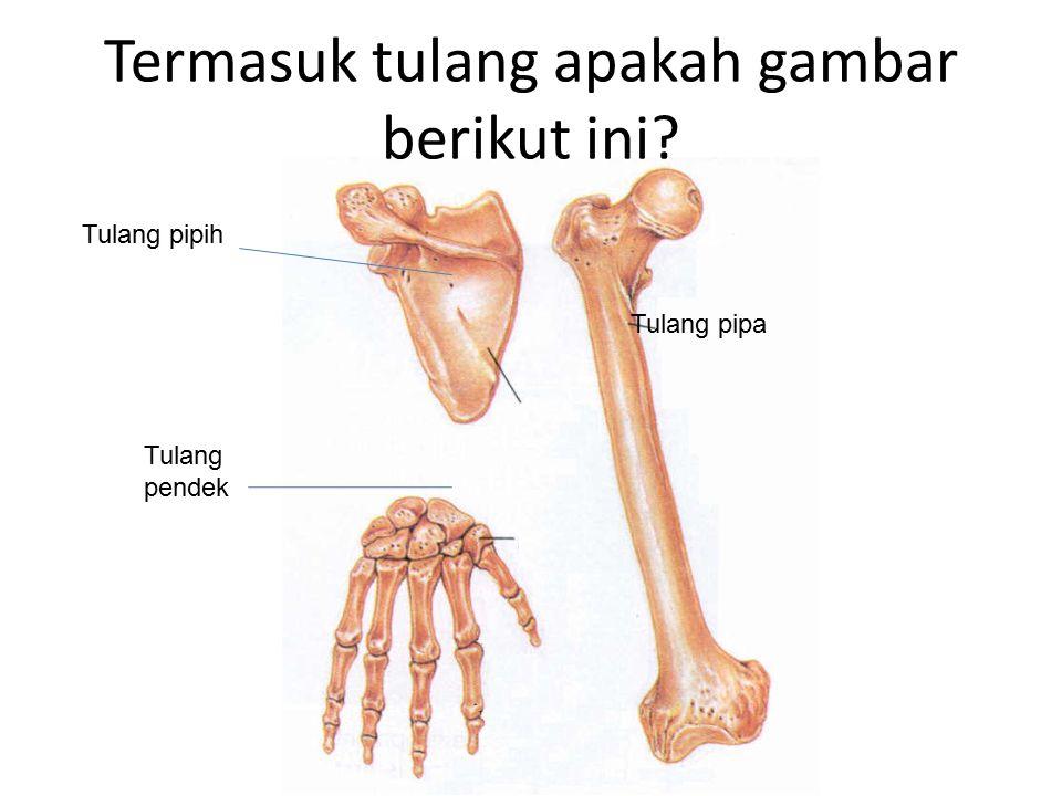 TULANG BERDASARKAN BENTUKNYA Tulang PIPA Tulang PIPIH Tulang PIPIH Tulang PENDEK TL PAHA, BETIS, LENGAN TL RUSUK, DADA, KEPALA TL PERGELANGAN TANGAN & KAKI, TELAPAK TANGAN &KAKI