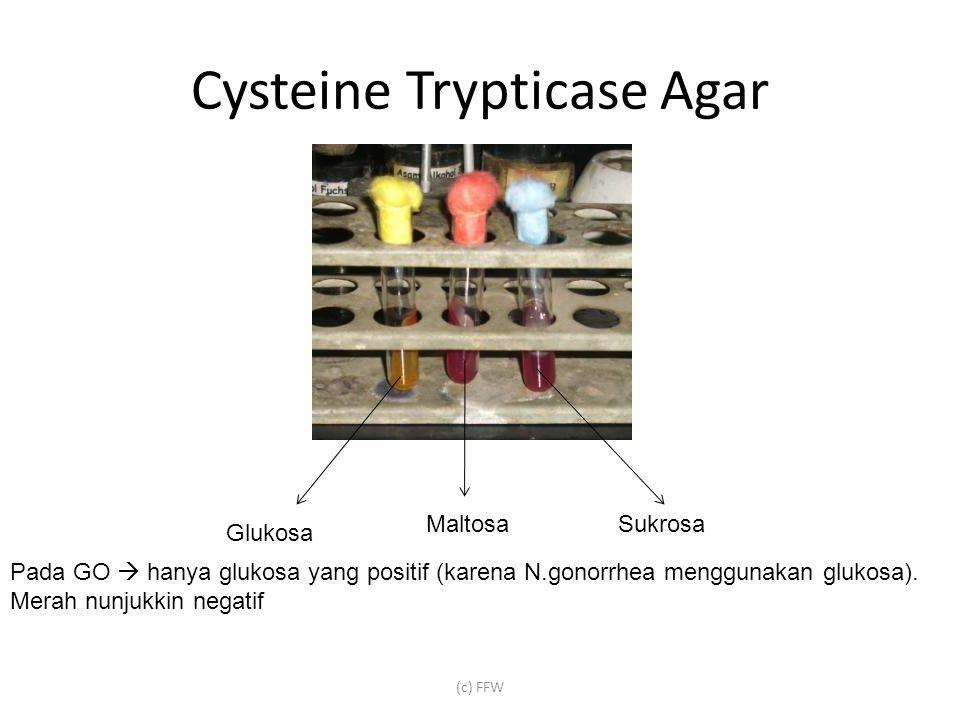 Cysteine Trypticase Agar (c) FFW Glukosa MaltosaSukrosa Pada GO  hanya glukosa yang positif (karena N.gonorrhea menggunakan glukosa).