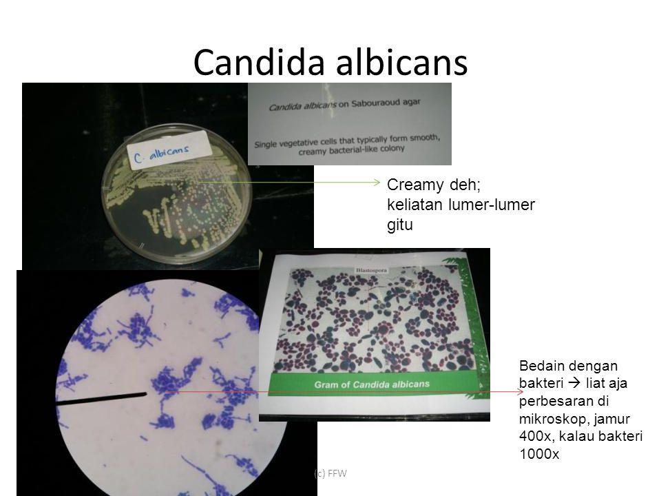 Candida albicans (c) FFW Creamy deh; keliatan lumer-lumer gitu Bedain dengan bakteri  liat aja perbesaran di mikroskop, jamur 400x, kalau bakteri 1000x
