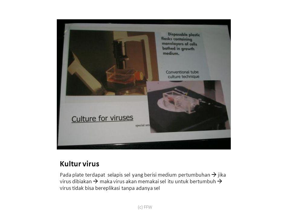 Kultur virus Pada plate terdapat selapis sel yang berisi medium pertumbuhan  jika virus dibiakan  maka virus akan memakai sel itu untuk bertumbuh  virus tidak bisa bereplikasi tanpa adanya sel (c) FFW