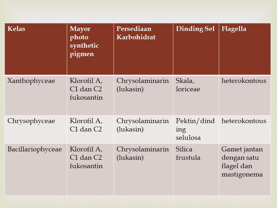  KelasMayor photo synthetic pigmen Persediaan Karbohidrat Dinding SelFlagella XanthophyceaeKlorofil A, C1 dan C2 fukosantin Chrysolaminarin (lukasin) Skala, loriceae heterokontous ChrysophyceaeKlorofil A, C1 dan C2 Chrysolaminarin (lukasin) Pektin/dind ing selulosa heterokontous BacillariophyceaeKlorofil A, C1 dan C2 fukosantin Chrysolaminarin (lukasin) Silica frustula Gamet jantan dengan satu flagel dan mastigonema