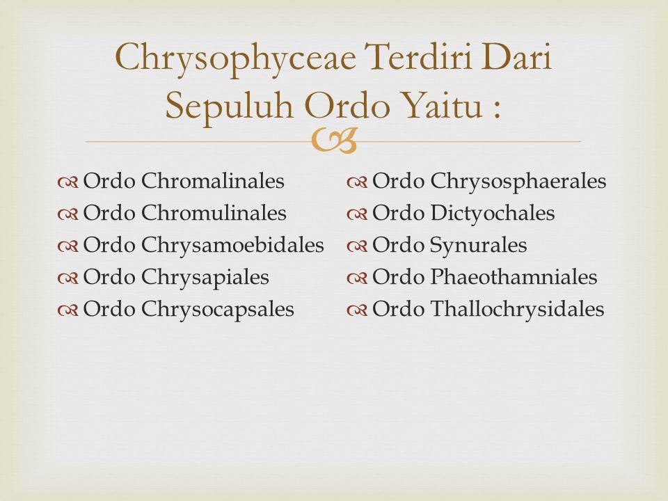  Chrysophyceae Terdiri Dari Sepuluh Ordo Yaitu :  Ordo Chromalinales  Ordo Chromulinales  Ordo Chrysamoebidales  Ordo Chrysapiales  Ordo Chrysocapsales  Ordo Chrysosphaerales  Ordo Dictyochales  Ordo Synurales  Ordo Phaeothamniales  Ordo Thallochrysidales