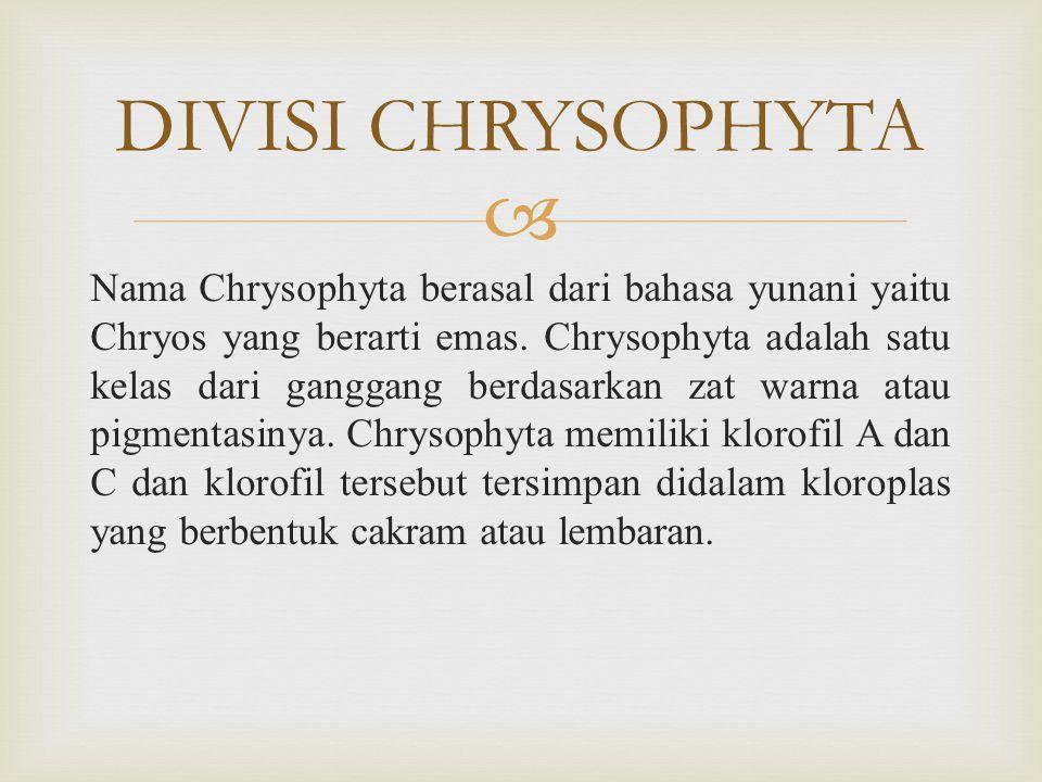  Nama Chrysophyta berasal dari bahasa yunani yaitu Chryos yang berarti emas.
