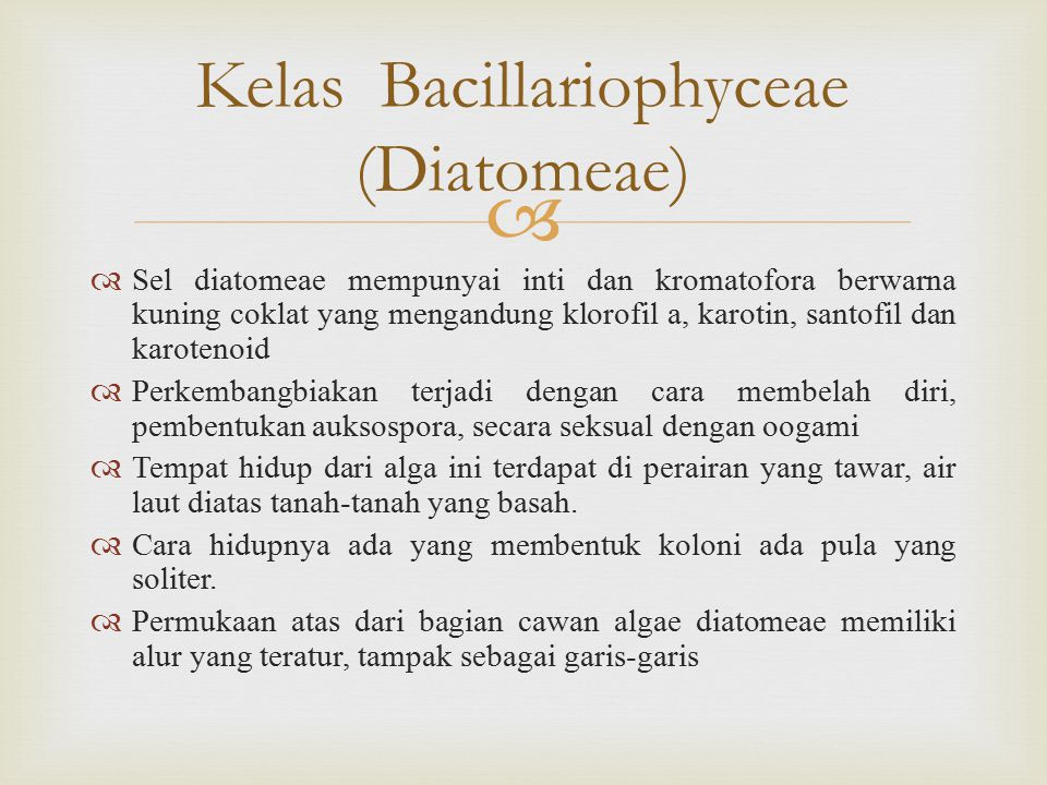   Sel diatomeae mempunyai inti dan kromatofora berwarna kuning coklat yang mengandung klorofil a, karotin, santofil dan karotenoid  Perkembangbiakan terjadi dengan cara membelah diri, pembentukan auksospora, secara seksual dengan oogami  Tempat hidup dari alga ini terdapat di perairan yang tawar, air laut diatas tanah-tanah yang basah.