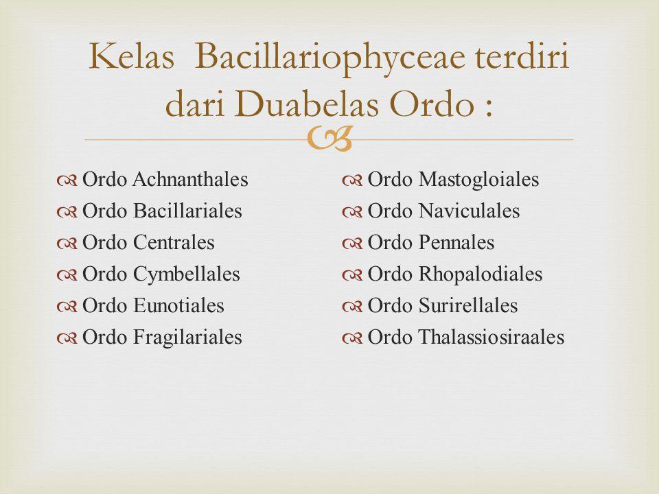  Kelas Bacillariophyceae terdiri dari Duabelas Ordo :  Ordo Achnanthales  Ordo Bacillariales  Ordo Centrales  Ordo Cymbellales  Ordo Eunotiales  Ordo Fragilariales  Ordo Mastogloiales  Ordo Naviculales  Ordo Pennales  Ordo Rhopalodiales  Ordo Surirellales  Ordo Thalassiosiraales