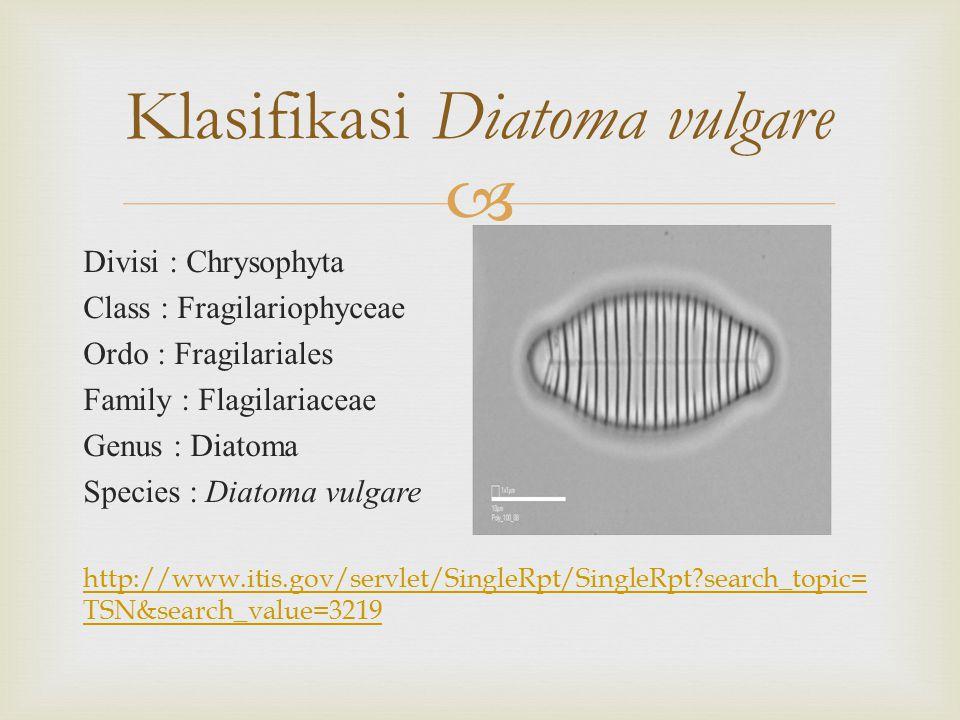  Divisi : Chrysophyta Class : Fragilariophyceae Ordo : Fragilariales Family : Flagilariaceae Genus : Diatoma Species : Diatoma vulgare http://www.itis.gov/servlet/SingleRpt/SingleRpt?search_topic= TSN&search_value=3219 Klasifikasi Diatoma vulgare
