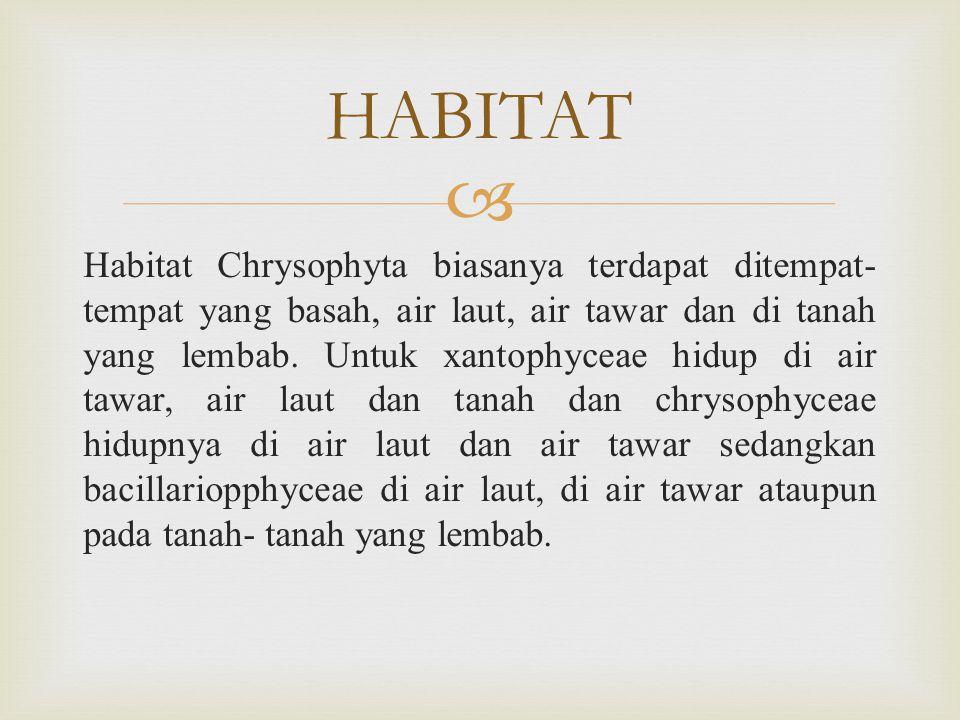  Habitat Chrysophyta biasanya terdapat ditempat- tempat yang basah, air laut, air tawar dan di tanah yang lembab.