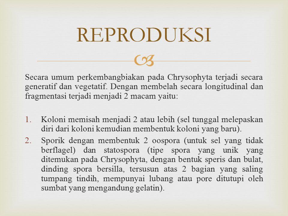  Secara umum perkembangbiakan pada Chrysophyta terjadi secara generatif dan vegetatif.