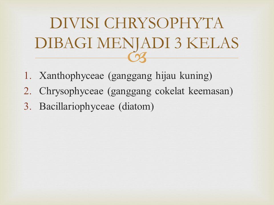  1.Xanthophyceae (ganggang hijau kuning) 2.Chrysophyceae (ganggang cokelat keemasan) 3.Bacillariophyceae (diatom) DIVISI CHRYSOPHYTA DIBAGI MENJADI 3 KELAS