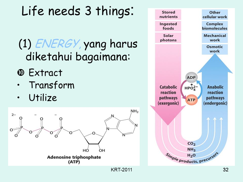 KRT-201131 Concepts of Life Kehidupan dicirikan oleh: Biological diversity: lichen, microbes, jellyfish, sequoias, hummingbirds, manta rays, gila monsters, & you Chemical unity: living systems (on earth) obey the rules of physical and organic chemistry – there are no new principles