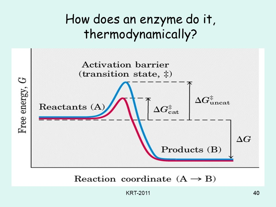 KRT-201139 Trick #2: Life uses enzymes to speed up otherwise slow reactions