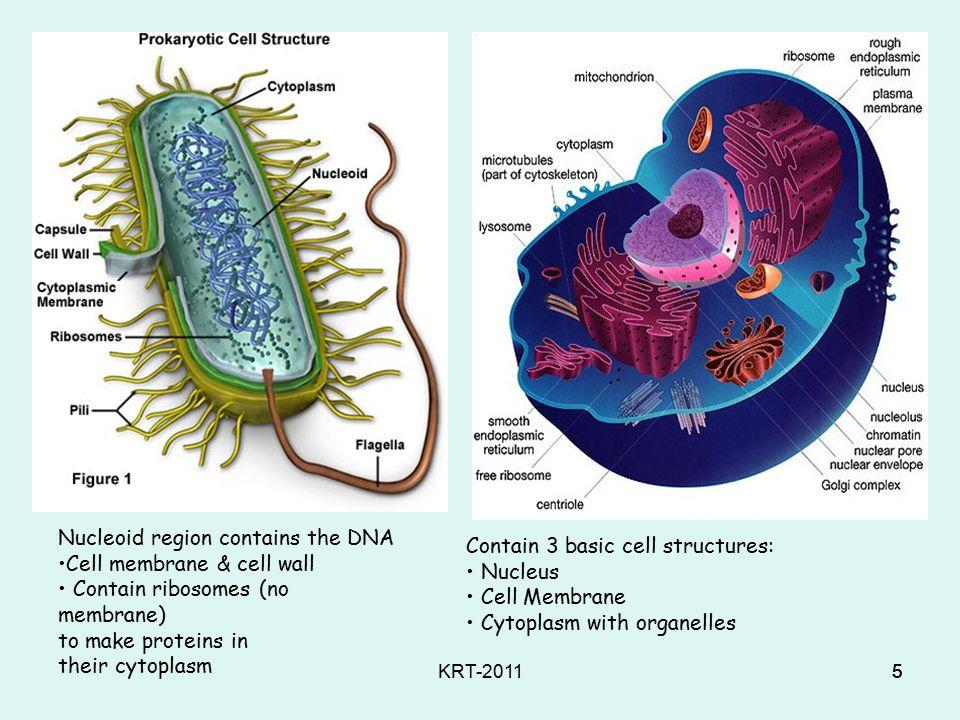 KRT-20114 Cells Basic building blocks of life Unit kehidupan terkecil dari suatu organisme Tumbuh, reproduksi menggunakan energi, adaptasi, respon terhadap lingkungannya Banyak yang tak terlihat dengan mata telanjang Organisme bersel Satu atau berjuta-juta sel yang menyusun suatu organisme
