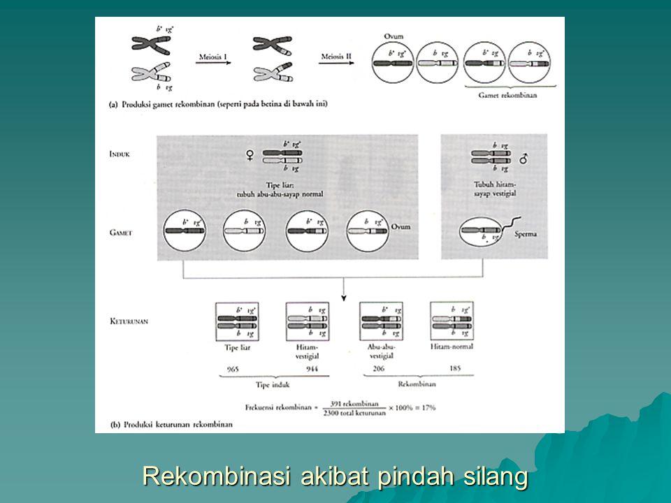 Perubahan struktur kromosom Tanda panah vertikal menunjukkan titik pemutusan kromosom.