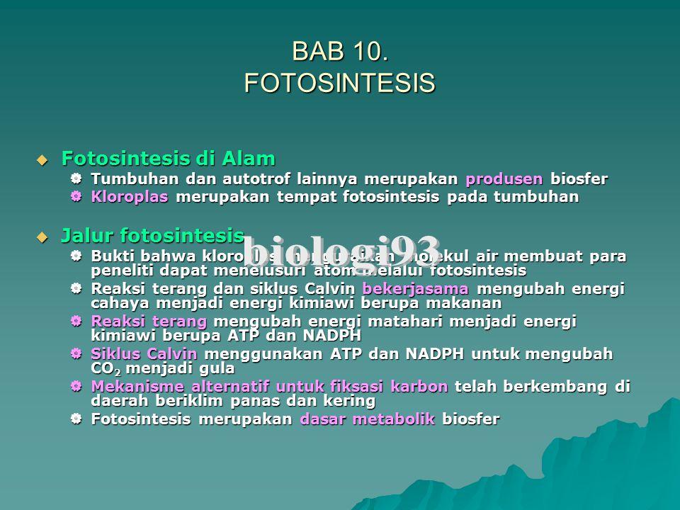 Tempat fotosintesis pada tumbuhan Dedaunan merupakan organ utama fotosintesis pada tumbuhan.
