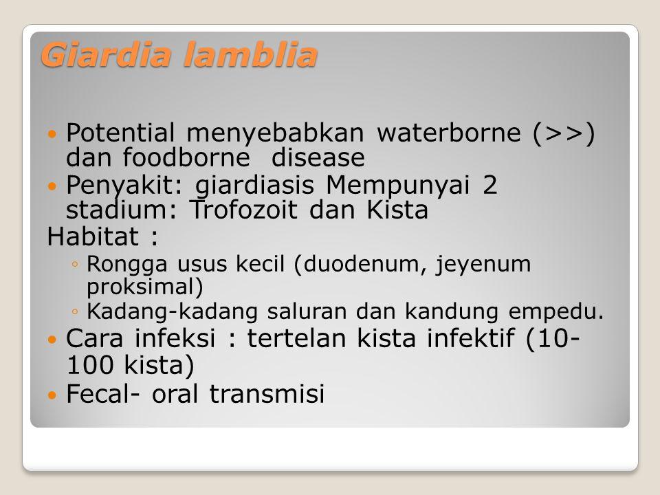 Giardia lamblia Potential menyebabkan waterborne (>>) dan foodborne disease Penyakit: giardiasis Mempunyai 2 stadium: Trofozoit dan Kista Habitat : ◦Rongga usus kecil (duodenum, jeyenum proksimal) ◦Kadang-kadang saluran dan kandung empedu.