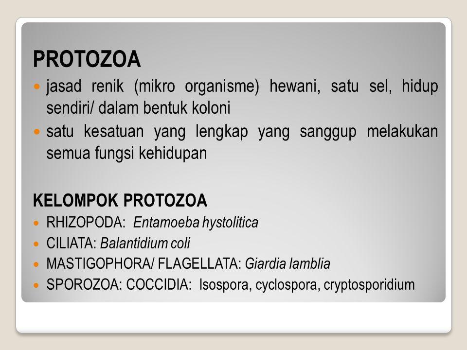PROTOZOA jasad renik (mikro organisme) hewani, satu sel, hidup sendiri/ dalam bentuk koloni satu kesatuan yang lengkap yang sanggup melakukan semua fungsi kehidupan KELOMPOK PROTOZOA RHIZOPODA: Entamoeba hystolitica CILIATA: Balantidium coli MASTIGOPHORA/ FLAGELLATA: Giardia lamblia SPOROZOA: COCCIDIA: Isospora, cyclospora, cryptosporidium