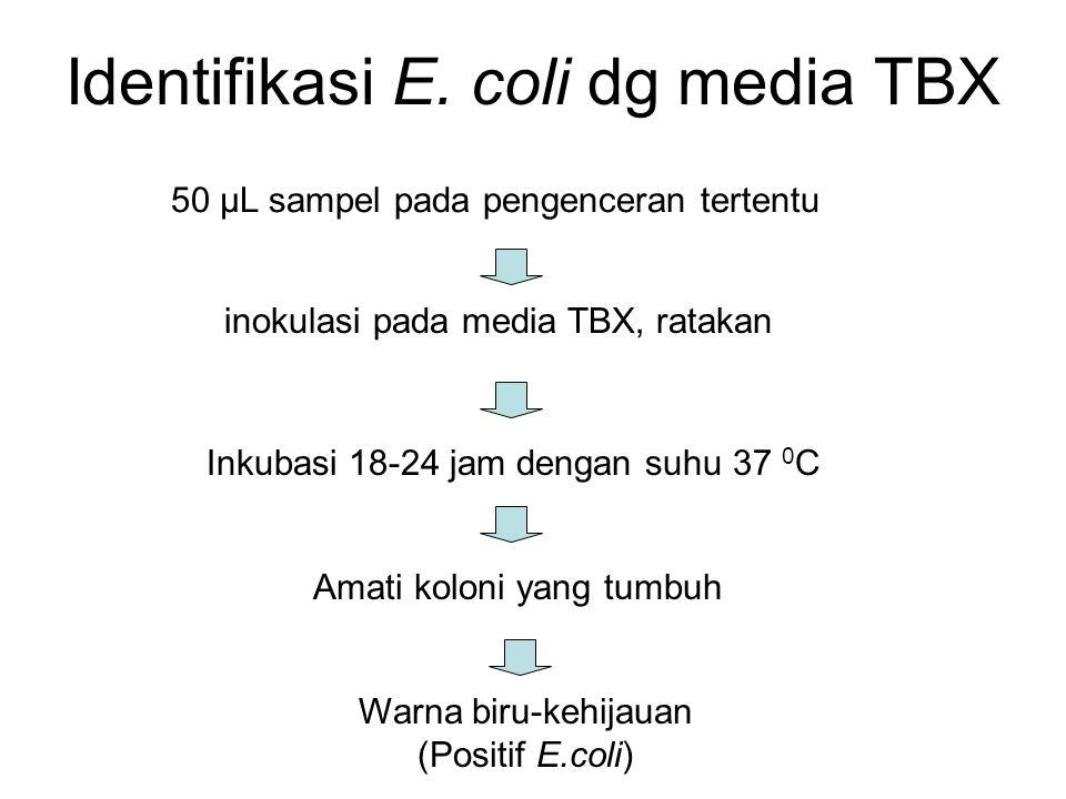 Identifikasi E. coli dg media TBX 50 µL sampel pada pengenceran tertentu inokulasi pada media TBX, ratakan Inkubasi 18-24 jam dengan suhu 37 0 C Amati