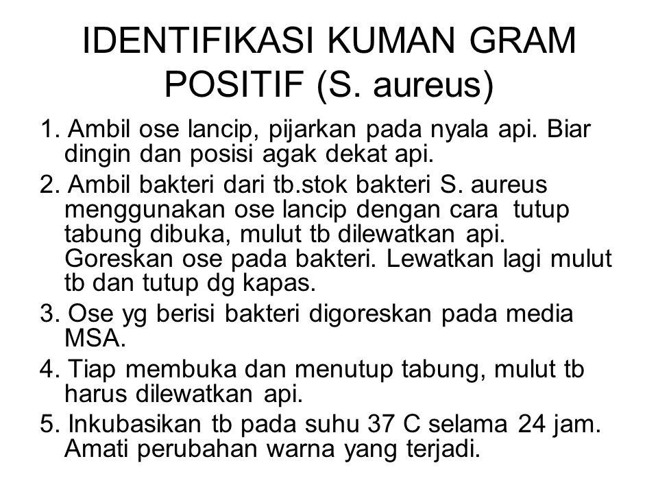 IDENTIFIKASI KUMAN GRAM POSITIF (S. aureus) 1. Ambil ose lancip, pijarkan pada nyala api. Biar dingin dan posisi agak dekat api. 2. Ambil bakteri dari