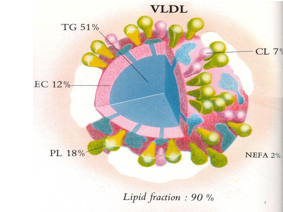 LDL (ß-Lipoprotein) d = 1,006 – 1.063 Kaya akan kolesterol & dibentuk di plasma, berasal dari degradasi VLDL.