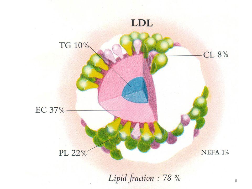 PEMERIKSAAN LIPID Pemeriksaan Pola lipid yang umum meliputi : 1.Kolesterol total 2.Trigliserida 3.Kolesterol HDL 4.Kolesterol LDL Pemeriksaan pola lipid lainnya yang sangat penting adalah : Apo AI, Apo B, Lp(a), sd-LDL 19