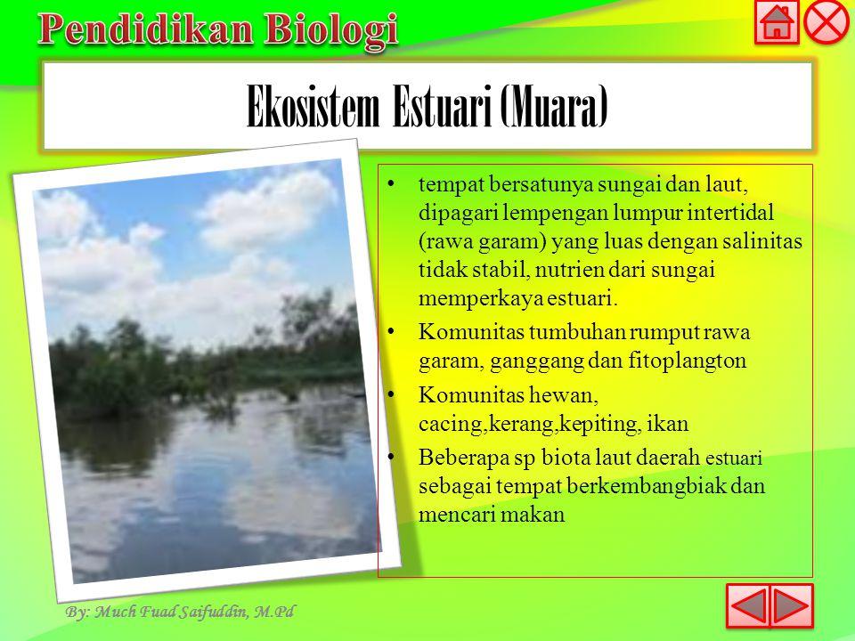 Ekosistem Estuari (Muara) By: Much Fuad Saifuddin, M.Pd tempat bersatunya sungai dan laut, dipagari lempengan lumpur intertidal (rawa garam) yang luas