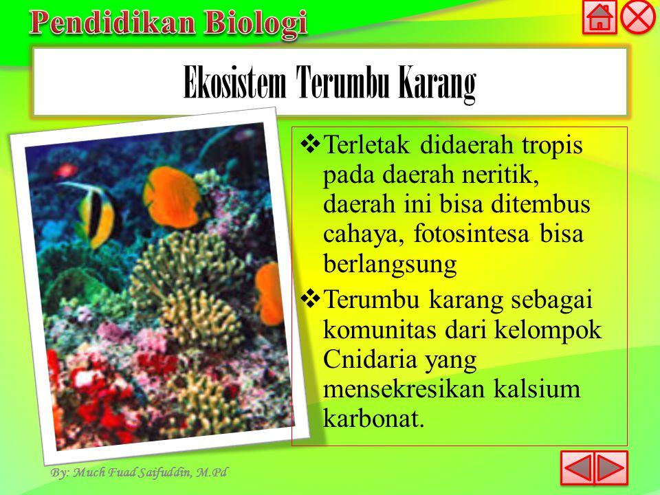 Ekosistem Terumbu Karang By: Much Fuad Saifuddin, M.Pd  Terletak didaerah tropis pada daerah neritik, daerah ini bisa ditembus cahaya, fotosintesa bi