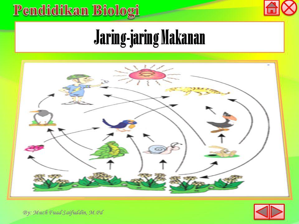 Jaring-jaring Makanan By: Much Fuad Saifuddin, M.Pd