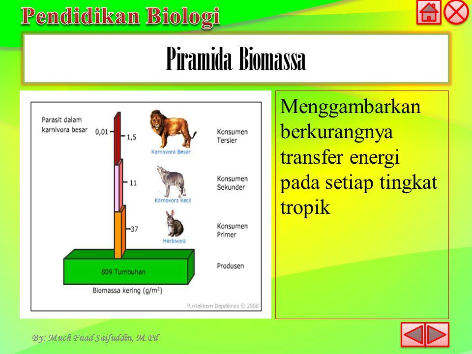 Piramida Biomassa By: Much Fuad Saifuddin, M.Pd Menggambarkan berkurangnya transfer energi pada setiap tingkat tropik
