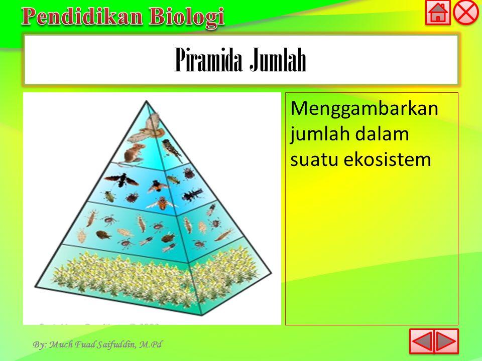 Piramida Jumlah By: Much Fuad Saifuddin, M.Pd Menggambarkan jumlah dalam suatu ekosistem