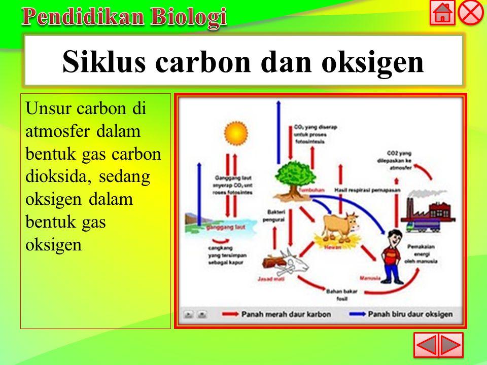 Siklus carbon dan oksigen Unsur carbon di atmosfer dalam bentuk gas carbon dioksida, sedang oksigen dalam bentuk gas oksigen