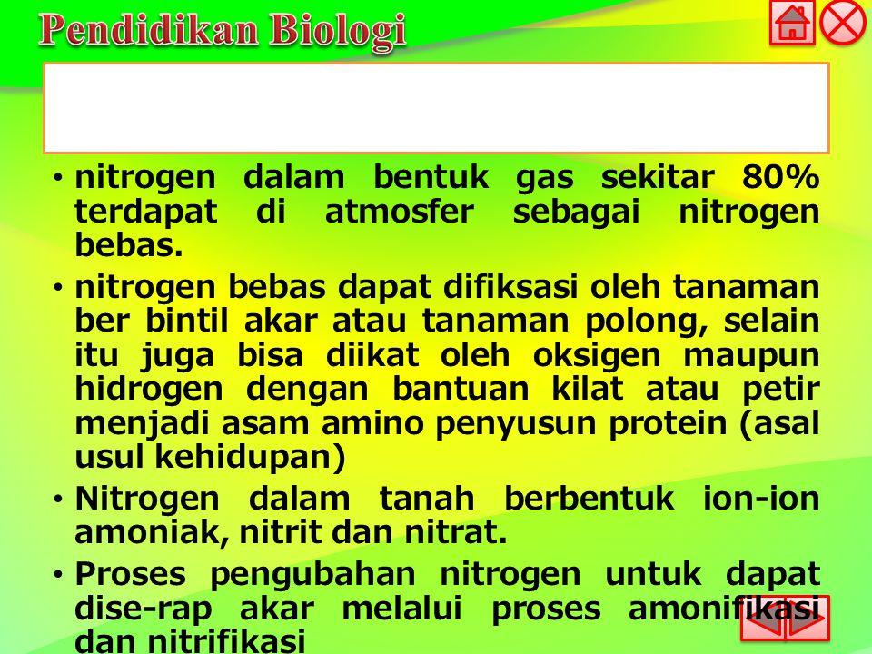 nitrogen dalam bentuk gas sekitar 80% terdapat di atmosfer sebagai nitrogen bebas. nitrogen bebas dapat difiksasi oleh tanaman ber bintil akar atau ta