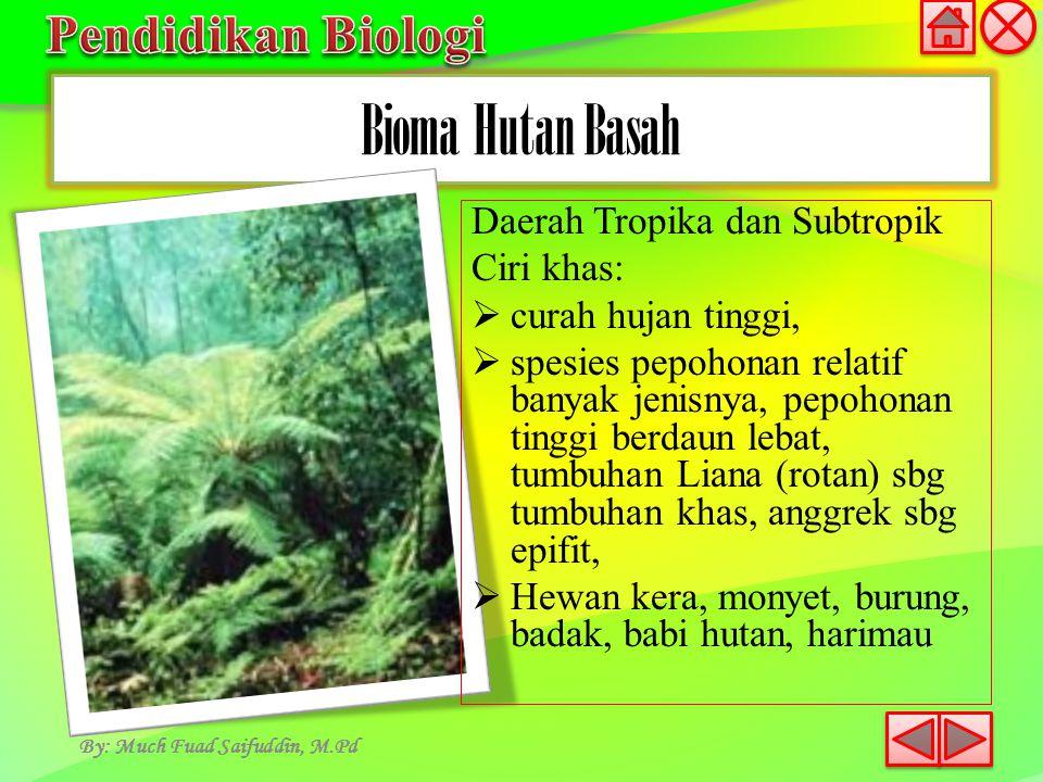Bioma Hutan Basah By: Much Fuad Saifuddin, M.Pd Daerah Tropika dan Subtropik Ciri khas:  curah hujan tinggi,  spesies pepohonan relatif banyak jenis