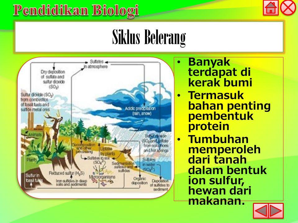 Siklus Belerang Banyak terdapat di kerak bumi Termasuk bahan penting pembentuk protein Tumbuhan memperoleh dari tanah dalam bentuk ion sulfur, hewan d