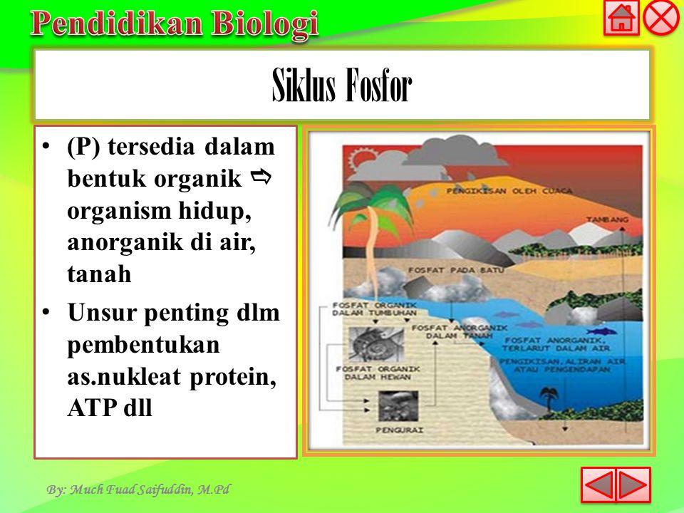 By: Much Fuad Saifuddin, M.Pd (P) tersedia dalam bentuk organik  organismhidup, anorganik di air, tanah Unsur penting dlm pembentukan as.nukleat prot