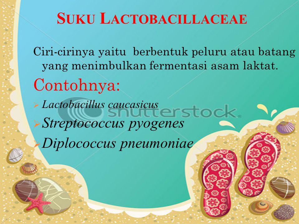 S UKU L ACTOBACILLACEAE Ciri-cirinya yaitu berbentuk peluru atau batang yang menimbulkan fermentasi asam laktat. Contohnya:  Lactobacillus caucasicus