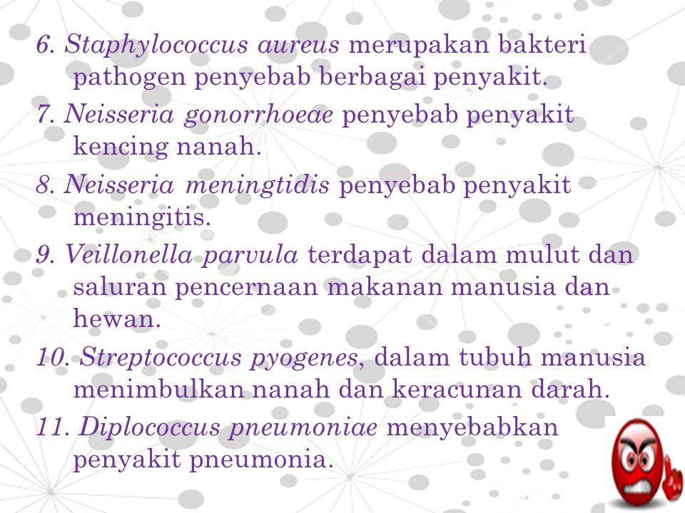 6. Staphylococcus aureus merupakan bakteri pathogen penyebab berbagai penyakit. 7. Neisseria gonorrhoeae penyebab penyakit kencing nanah. 8. Neisseria