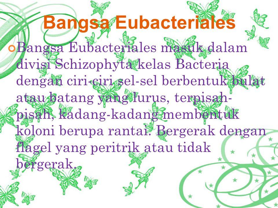 Bangsa Eubacteriales masuk dalam divisi Schizophyta kelas Bacteria dengan ciri-ciri sel-sel berbentuk bulat atau batang yang lurus, terpisah- pisah, kadang-kadang membentuk koloni berupa rantai.