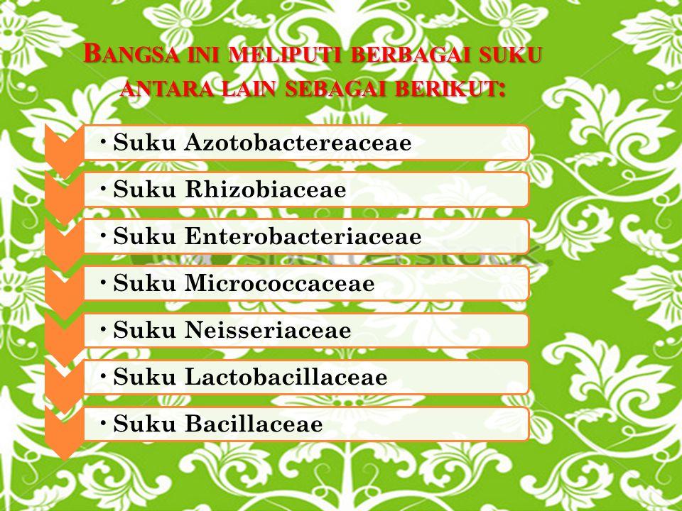 B ANGSA INI MELIPUTI BERBAGAI SUKU ANTARA LAIN SEBAGAI BERIKUT : Suku Azotobactereaceae Suku Rhizobiaceae Suku Enterobacteriaceae Suku Micrococcaceae