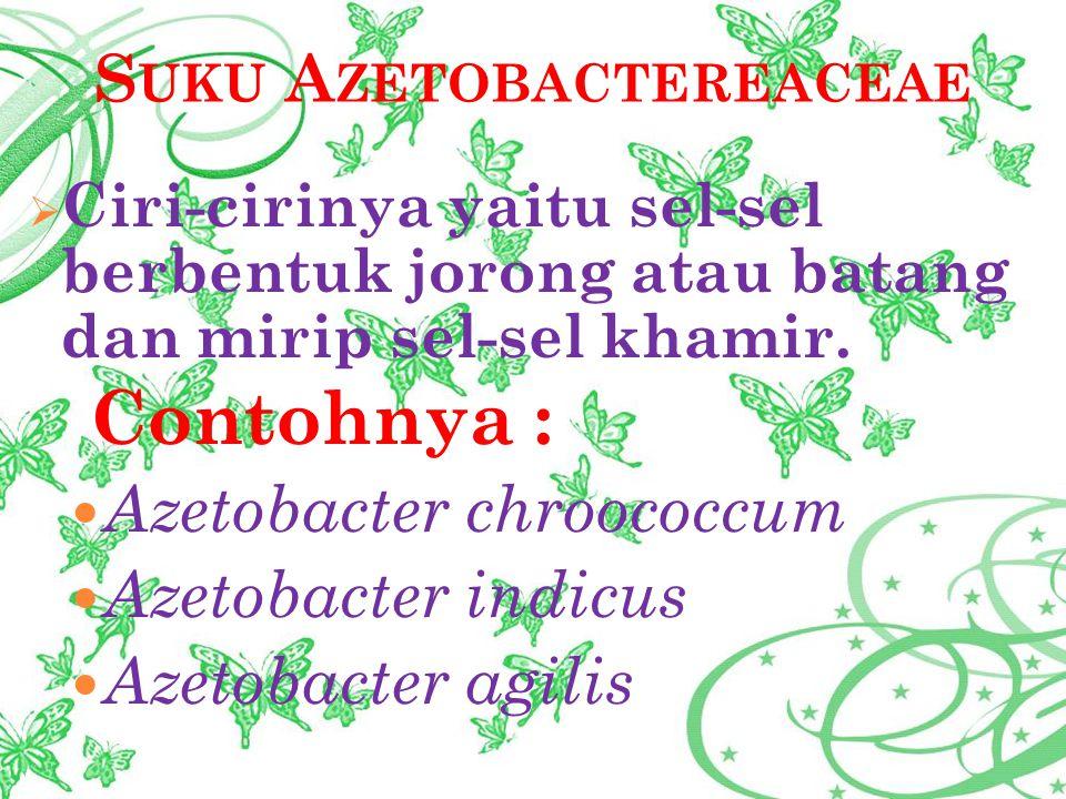 S UKU A ZETOBACTEREACEAE  Ciri-cirinya yaitu sel-sel berbentuk jorong atau batang dan mirip sel-sel khamir. Contohnya : Azetobacter chroococcum Azeto