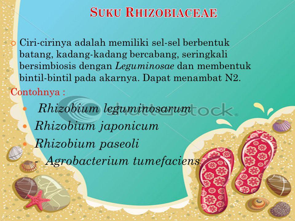S UKU E NTEROBACTERIACEAE Ciri-cirinya dapat menimbulkan fermentasi anaerobic pada glukosa, kadang-kadang juga laktosa.