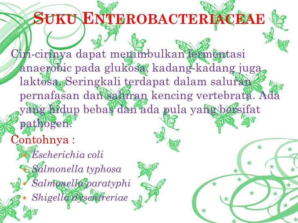 S UKU E NTEROBACTERIACEAE Ciri-cirinya dapat menimbulkan fermentasi anaerobic pada glukosa, kadang-kadang juga laktosa. Seringkali terdapat dalam salu