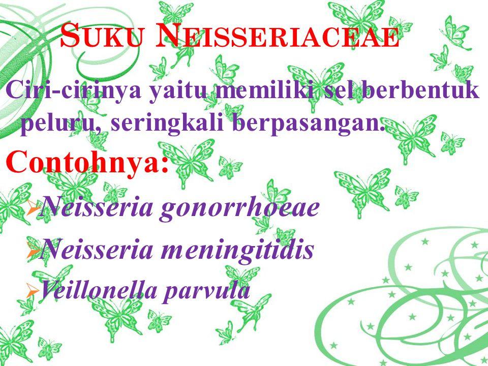 S UKU N EISSERIACEAE Ciri-cirinya yaitu memiliki sel berbentuk peluru, seringkali berpasangan. Contohnya:  Neisseria gonorrhoeae  Neisseria meningit